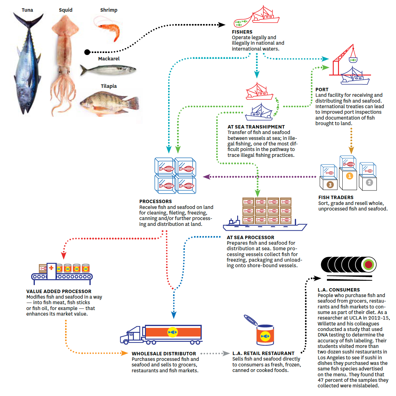 Fish Fraud Diagram